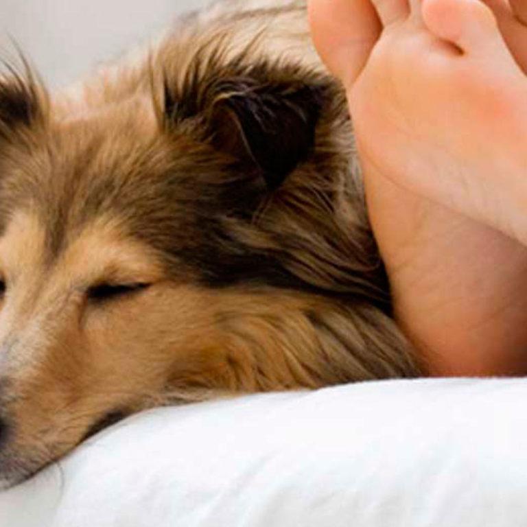¿Qué pasa si tu perro duerme en tu cama?